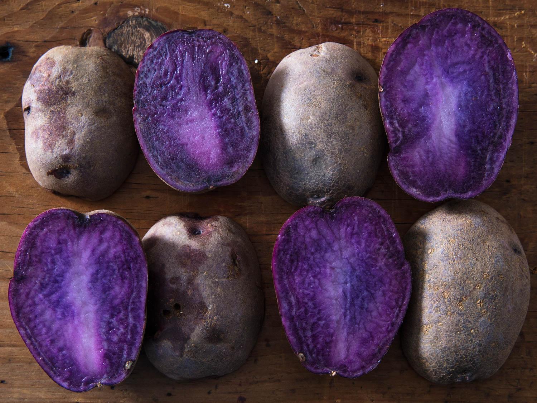 Adirondak-siniy-kartofel