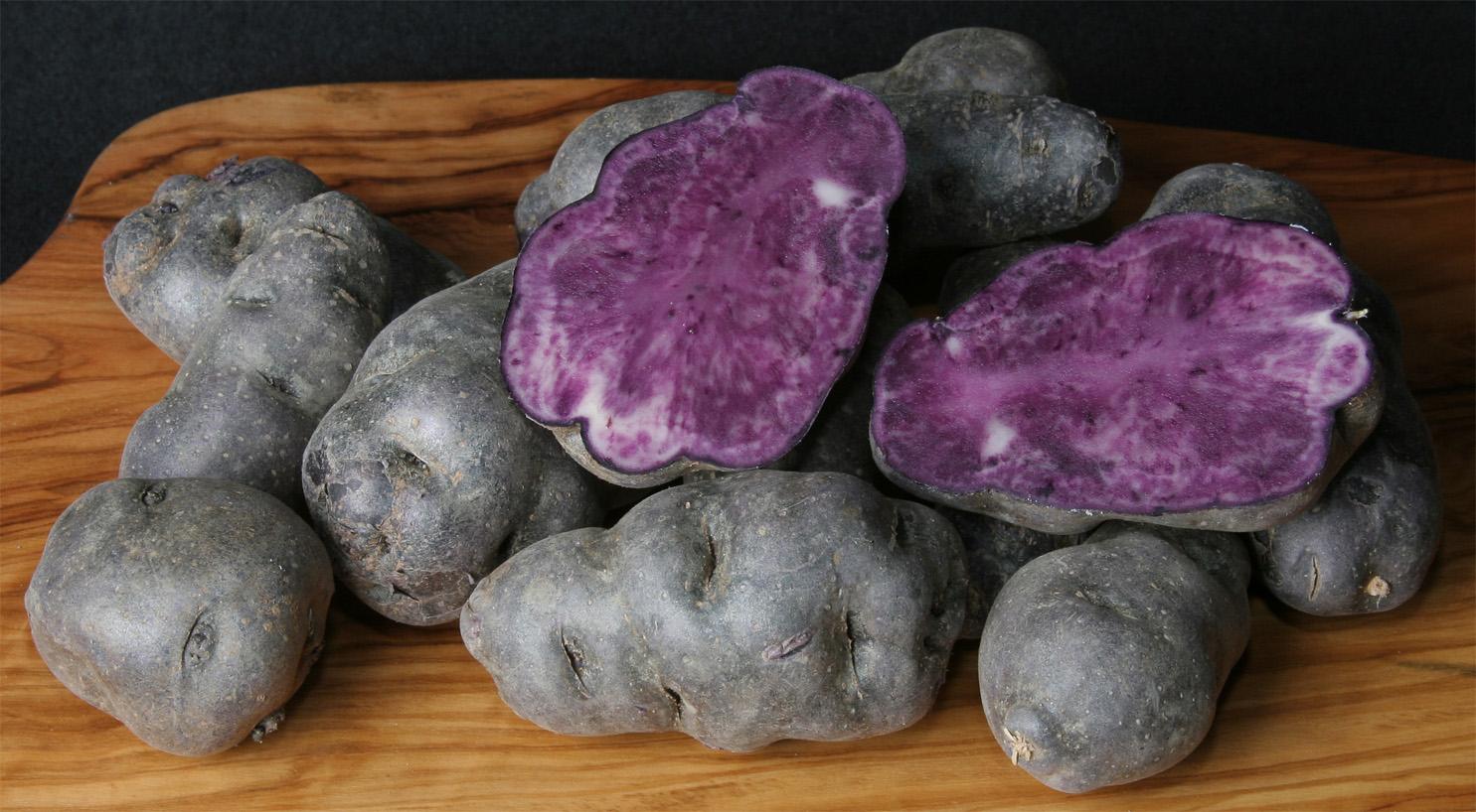 Vitelot-fioletoviy-kartofel