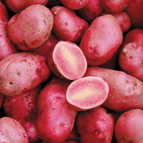 Rote-Emma-krasniy-kartofel