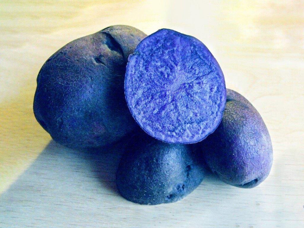 Russian-blue-siniy-kartofel