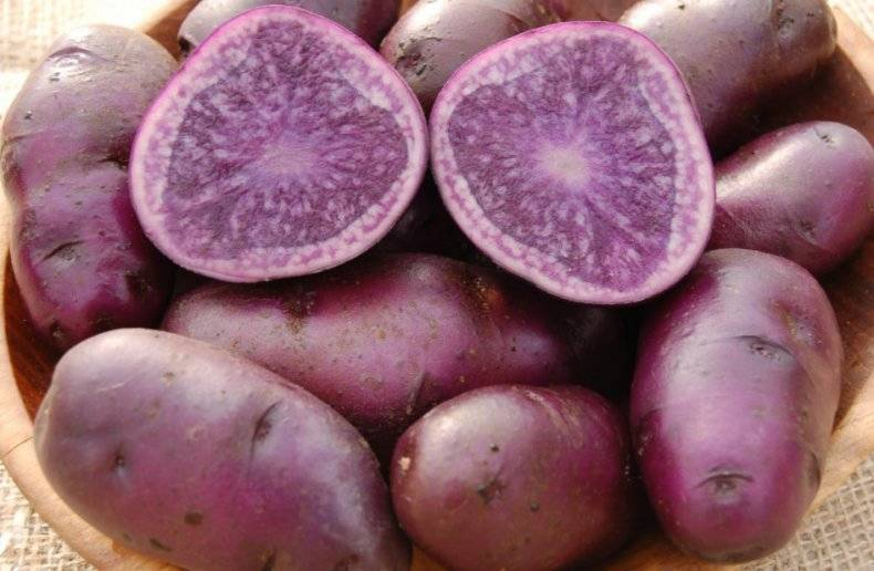 Red-Vander-krasniy-kartofel
