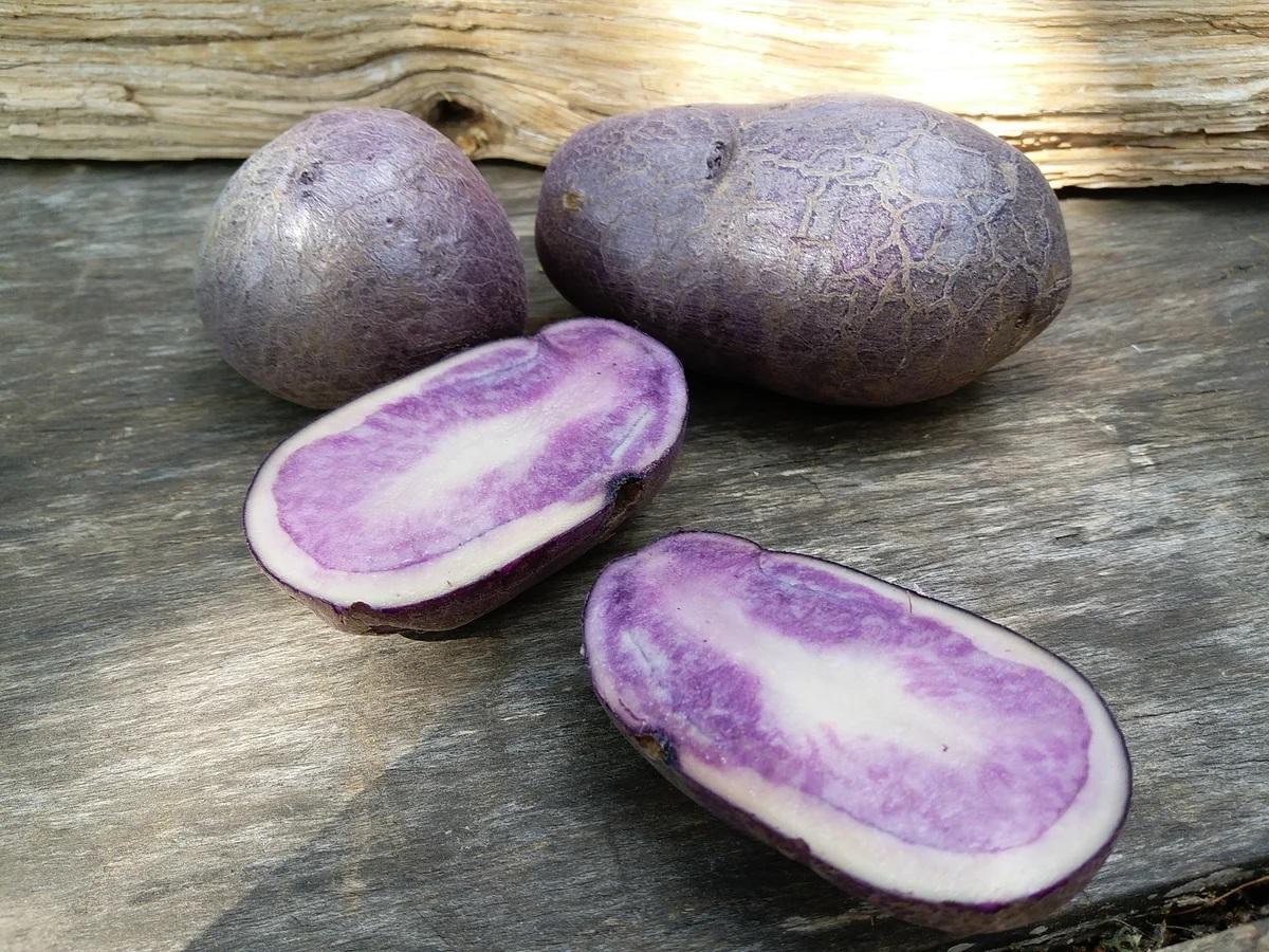 Purple-Peliss-Fioletoviy-krasavets