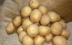 Описание и характеристики сорта картофеля Ривьера