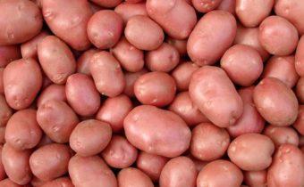 Характеристика и описание сорта картофеля Беллароза