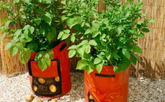 картофель в мешках